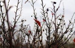 Серая красная весна Стоковое Изображение RF
