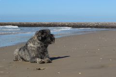 Серая лежа собака на песчаном пляже берега моря 1 Стоковые Изображения