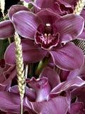 Серая пурпуровая орхидея Стоковое Изображение RF