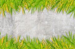 Серая стена гипсолита с bamboo листьями Стоковые Фото