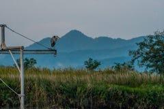 Серая цапля стоя на поперечной балке металла Стоковая Фотография