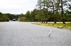Серая цапля в саде Киото Gyoen, Киото Стоковое Изображение