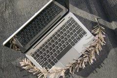 Серая чернота ветви компьтер-книжки и цветка стоковое изображение