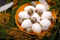 Сервировка стола пасхи с белыми яичками с изображением селективного фокуса цветка мимозы пасха счастливая Стоковые Фотографии RF