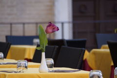 Сервировка стола цветка Стоковая Фотография RF