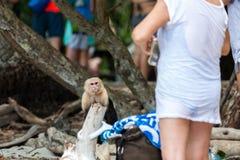 Сердитая белая обезьяна стороны Стоковая Фотография