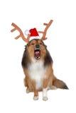 сердитая собака оленей рождества Стоковое Фото