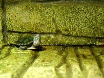 сердитая черепаха Стоковые Изображения RF