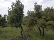 Сердитое дерево стоковое фото