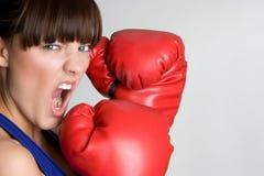 сердитый боксер Стоковые Изображения