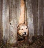 Сердитый взгляд собаки на снаружи Стоковая Фотография