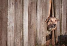 Сердитый взгляд собаки на снаружи Стоковое фото RF
