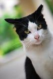 Сердитый кот стоковые фотографии rf