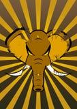 сердитый слон Стоковое Изображение RF