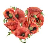 Сердце акварели с красными маками Вручите покрашенные цветки и листья изолированные на белой предпосылке Печать дня ` s валентинк иллюстрация вектора