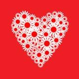 Сердце белых маргариток иллюстрация штока