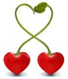 сердце вишни иллюстрация штока