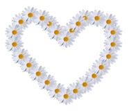 сердце маргаритки Стоковое Изображение