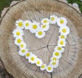сердце маргаритки Стоковые Фотографии RF