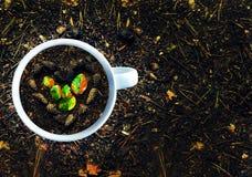 Сердце осени в белой чашке творческая идея стоковое фото rf