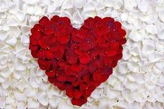 Сердце розовых лепестков Стоковое Изображение
