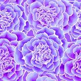 Сердце роз безшовное Стоковые Изображения