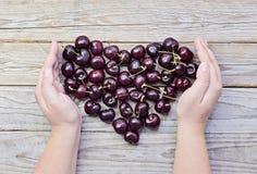 Сердце свежих и зрелых вишен в приданных форму чашки женских руках Стоковые Фото