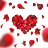 сердце сделало лепестки подняло Сердце лепестков красной розы над белой предпосылкой Взгляд сверху с космосом экземпляра для ваше Стоковая Фотография