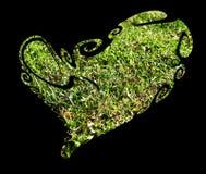 Сердце сделанное естественной травы, изображение влюбленности Стоковое Изображение RF