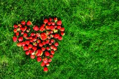 Сердце сделанное из клубник на зеленой лужайке Стоковое Фото