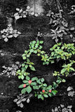 сердце травы стоковая фотография