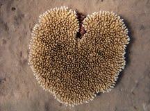 сердце dahab коралла египетское около форменного Стоковые Фотографии RF