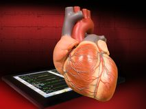 сердце ekg Стоковые Фото