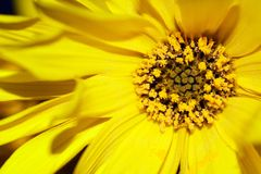 сердце s цветка Стоковые Фотографии RF