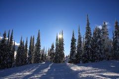 серебряная лыжа склоняет звезда Стоковые Фотографии RF