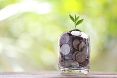 Серебряная монета в стекле помещена на деревянном growi пола и treetop Стоковое фото RF
