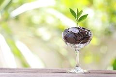 Серебряная монета в стекле помещена на деревянном growi пола и treetop Стоковые Фотографии RF