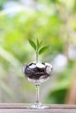 Серебряная монета в стекле помещена на деревянном growi пола и treetop Стоковое Изображение RF