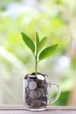 Серебряная монета в стекле помещена на деревянном growi пола и treetop Стоковая Фотография