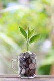 Серебряная монета в стекле помещена на деревянном growi пола и treetop Стоковые Фото