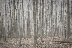Серебряные деревья в лесе зимы в гористых местностях Гудзона стоковое фото rf