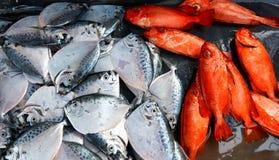Серебряные и красные рыбы среднего размера лежа на счетчике Стоковые Изображения RF