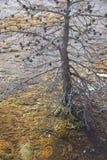 Серебряные конусы в национальном парке Йеллоустон Стоковое Фото