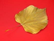 Серебряные листья Стоковые Фотографии RF