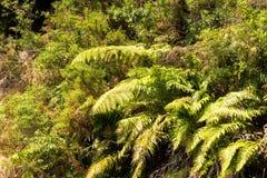 Серебряные папоротники, озеро Rotoiti, NZ Стоковая Фотография