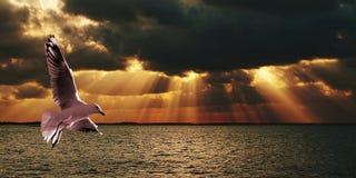 Серебряные чайка & солнечные лучи - заход солнца на море Стоковое фото RF
