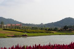 Серебряный виноградник озера в городе Таиланде Паттайя стоковые фото