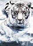серебряный тигр Стоковое Изображение RF