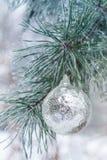 Серебряный шарик весит на ветви сосны Стоковое Изображение