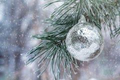 Серебряный шарик весит на ветви сосны Стоковое Изображение RF